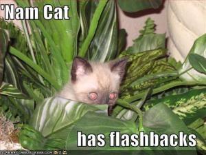 funny picture vietnam 'nam cat flashback