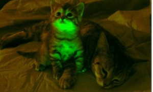 glowing kitten