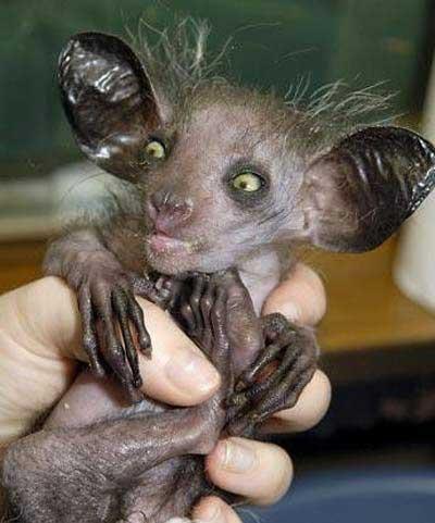 ugliest animal