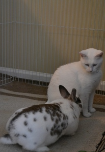 pangur ban cat rabbit friends