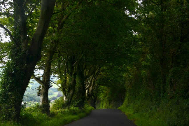 tree tunnel northern ireland