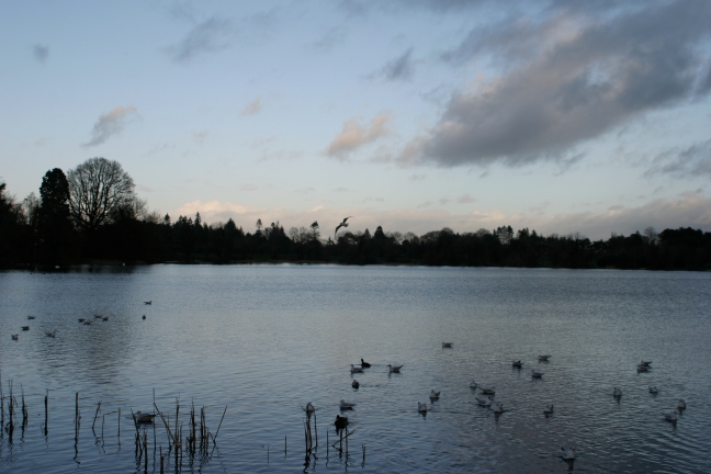 pond portadown ireland