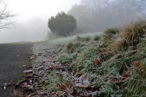 frost road misty