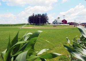 baseballcornfield