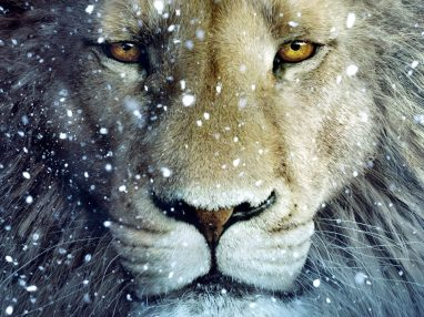 aslan narnia snow winter