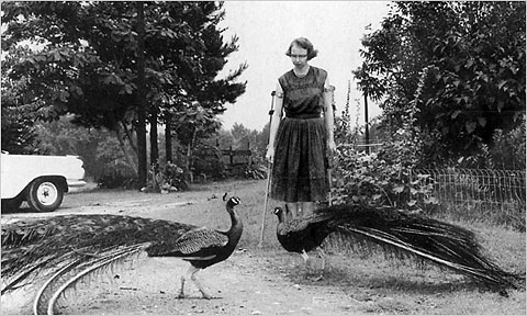 Miss Flannery feeding her Peacocks.