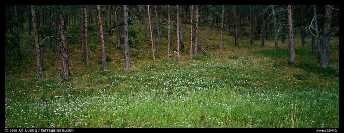 Forest edge in summer. Wind Cave National Park, South Dakota, USA.